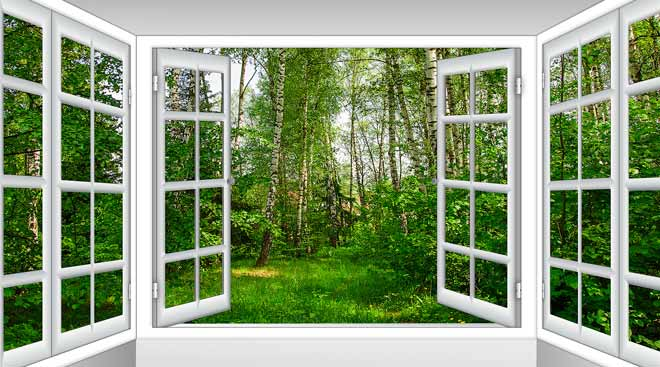 open window showing grass and woods outside